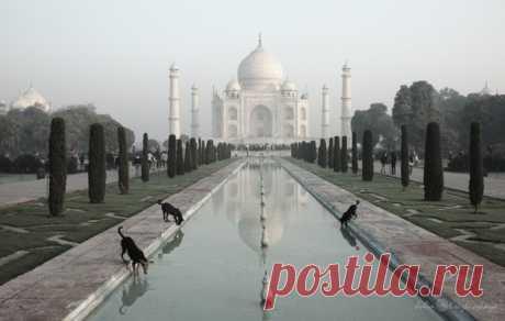 «Водопой». Тадж-Махал, Индия. Автор фото — Юлия Крижевская: nat-geo.ru/photo/user/162522/