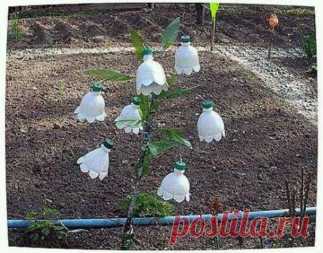 Поделки из пластиковых бутылок для дачи и сада