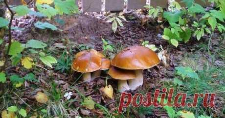 Как засеять участок на даче грибами. 2 простых и быстрых метода | Дачный СтройРемонт | Яндекс Дзен