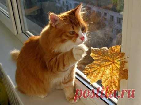 Тёплой и уютной осени всем котикам!
