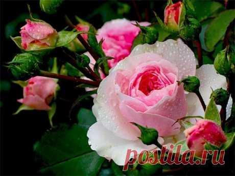 Пусть в наших сердцах никогда не будет гроз, только теплое лето, и запах роз...