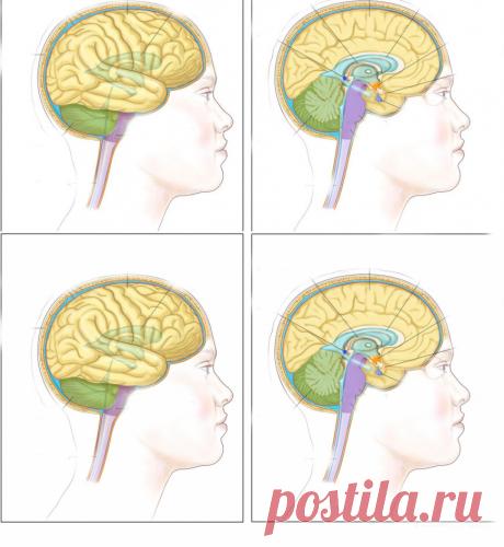 Вы страдаете от мигрени и головных болей? Это может быть вызвано дефицитом витаминов! - Полезные советы красоты