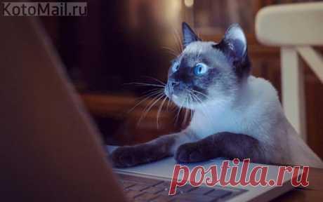 Разве в Интернете знают, что я кот?