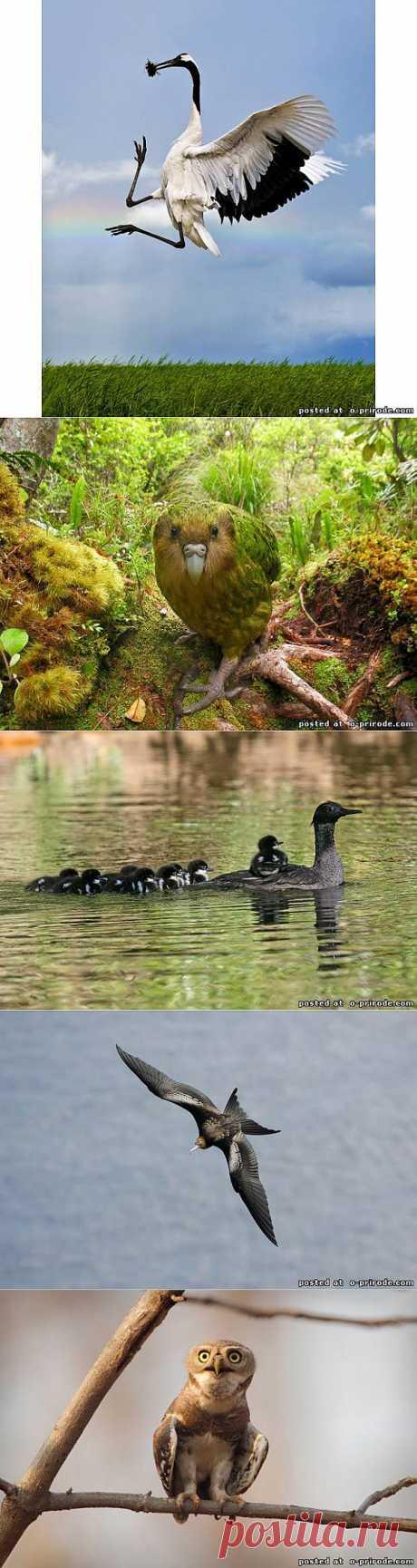 Редкие виды птиц - Фото мир природы