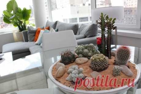 Самые неприхотливые и живучие комнатные растения