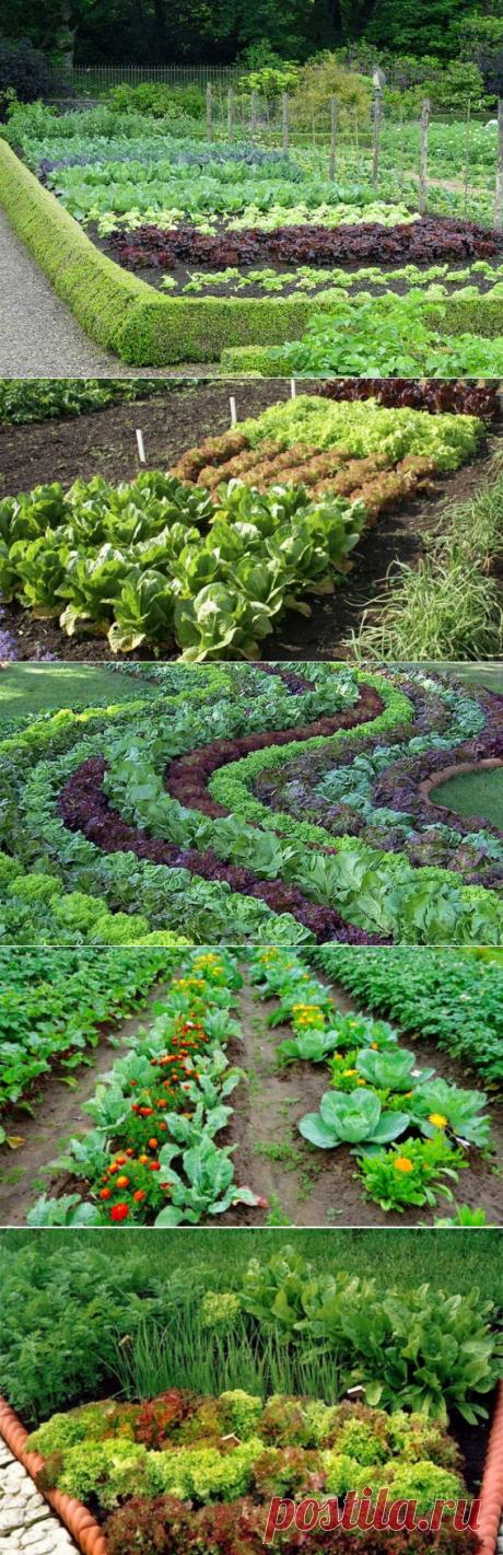 Смешанные посадки овощей на грядке: примеры