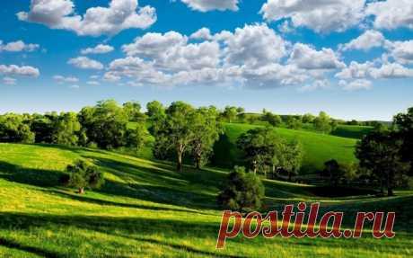 Зеленые холмы с деревьями Скачать картинку 2560x1600 Зеленые холмы с деревьями
