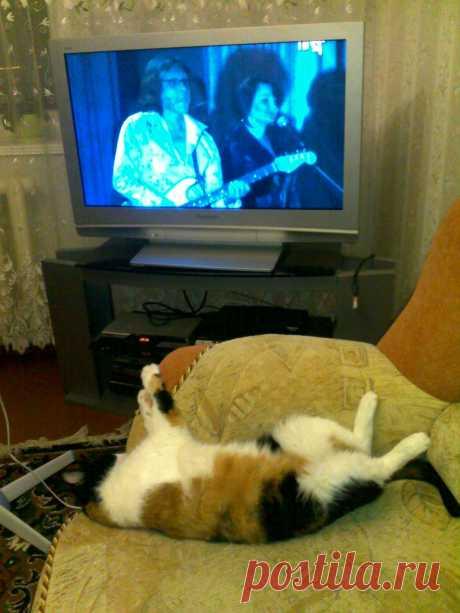 Кошка по кличке Марго - хозяйка дома...