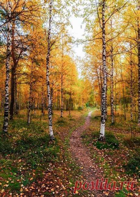 Осенний сентябрь.Игорь Подобаев