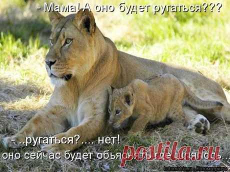 Зверские мысли вслух)   люблю зверюх... а вы?