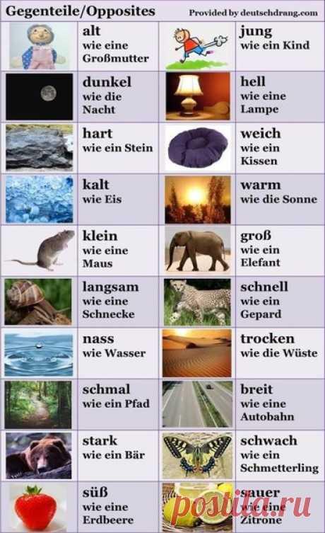 👆 👇 ПРОТИВОПОЛОЖНОСТИ 🇩🇪  / Изучение немецкого языка