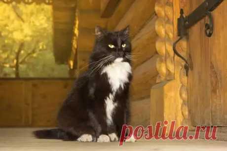 """Как кошки указывают на присутствия негативной энергии в доме... - Познавательный сайт ,,1000 мелочей"""" - медиаплатформа МирТесен"""
