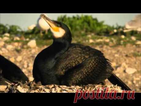 Дикая природа Скандинавии. 1. Дания / Denmark.1080p
