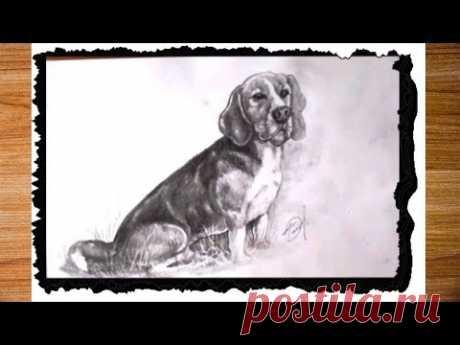 Нарисовать собаку карандашом для начинающих. Как нарисовать сидящую собаку