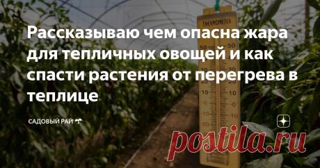 Рассказываю чем опасна жара для тепличных овощей и как спасти растения от перегрева в теплице   Садовый рай 🌱   Яндекс Дзен