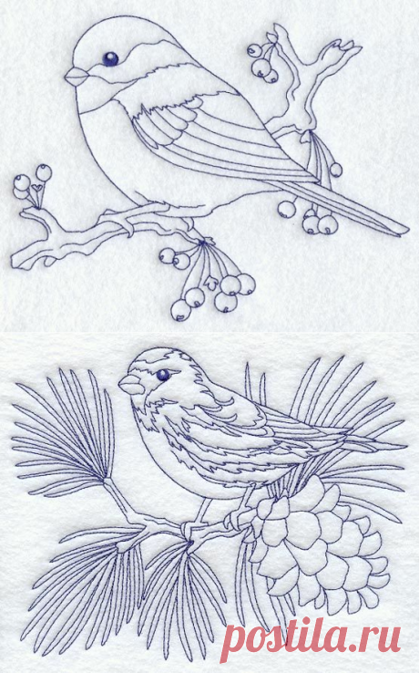 Птицы. Картинки для творчества...