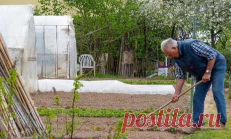 30 дел, которые надо сделать в саду, огороде и цветнике в мае | Новости (Огород.ru)
