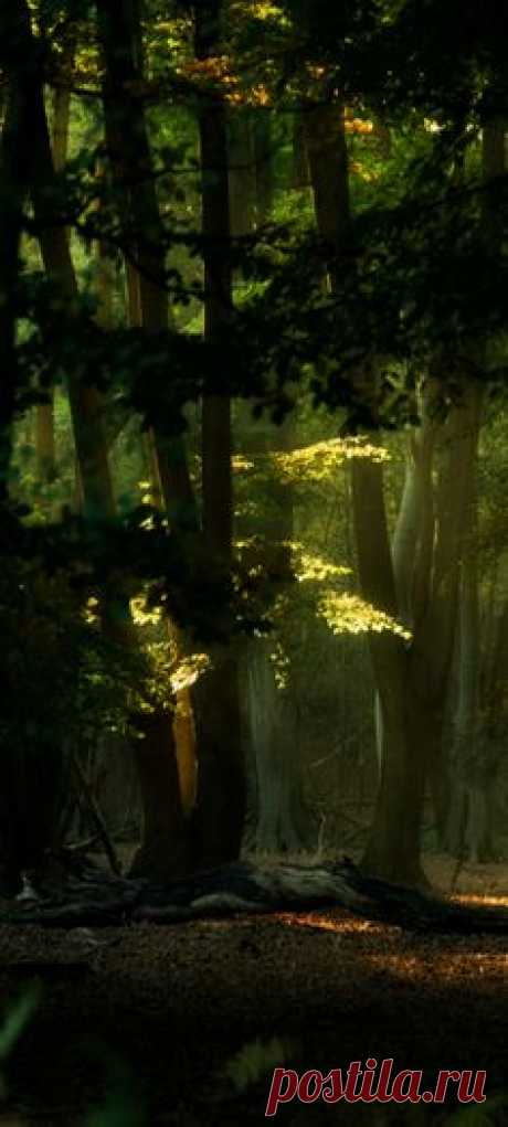 ~ forest ~