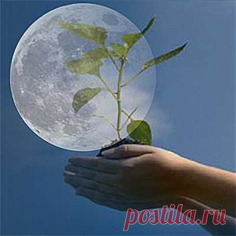 Календарь садовода и огородника на март 2014.