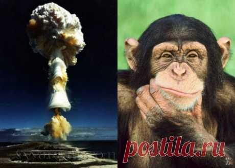 Очень интересная статья...Эффект сотой обезьяны. Критическая масса интеллекта.