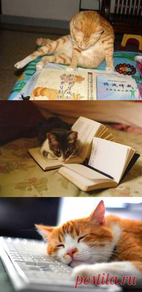 El gato el científico)