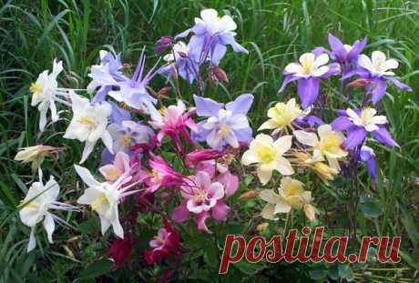 Рассада цветов: посев в апреле