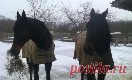 Я покупал спокойную лошадь, но продавец меня обманул | Интересно о лошадях | Яндекс Дзен