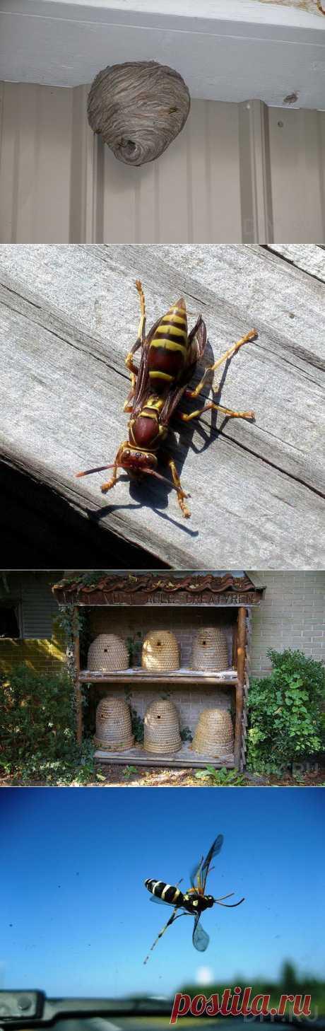 Как избавиться от пчел и ос   Твой Ремонт!!!