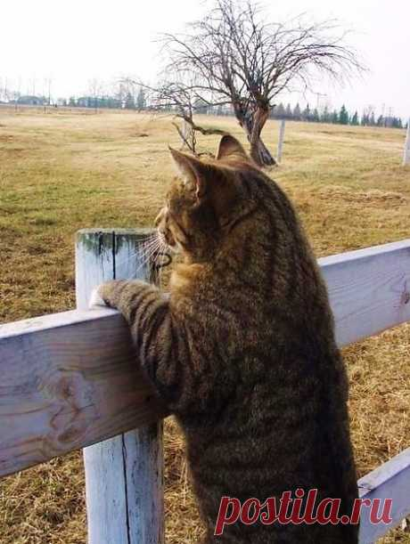 Уходит август на кошачьих лапках, В котомке спрятав летнее тепло. Он плащик легкий в рыженьких заплатках Сменяет на сентябрьское пальто.  Повяжет шарфик серенький на шее И грусть-печаль укутает в туман. На год он спрячет все свои затеи И на замок закроет свой карман.  В веранду стукнет яблоком из сада, Отшутится рябиновым костром И эхом золотого листопада Напомнит нам с тобою о былом.
