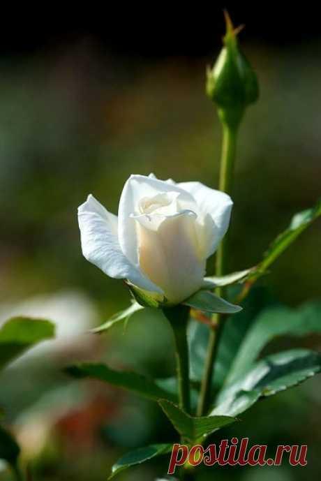 В общем, славно, когда хватает времени остановиться и понюхать розы...  Джоанн Харрис, из книги «Мальчик с голубыми глазами»