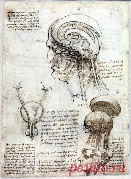 Одной из самых знаменитых личностей эпохи Возрождения является Леонардо да Винчи, проявивший себя в различных отраслях науки и искусства и, что важно для нашей темы, внёсший некоторый вклад в развитие медицины.  Увлечение анатомией заставляло Леонардо да Винчи препарировать трупы. В своих набросках головы он придерживается средневекового представления о сферических желудочках, передний из которых он называет «камерой здравого смысла», где располагается душа.