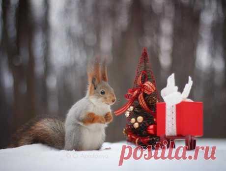 Поздравляем всех наших православных подписчиков с Рождеством! Автор фото: Olga Apostolova.