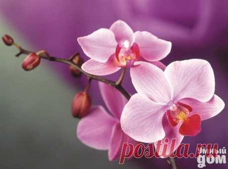 Как поливать орхидею.   Упрости себе жизнь