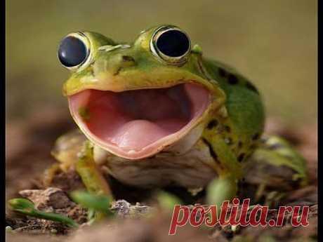 ▶ Эффект бешеной лягушки (фотошоп) - YouTube