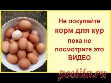 Не покупайте комбикорм для кур! Нет ничего лучше чем корм для кур своими руками!