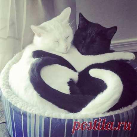25 кошек, которые уснули в необычных позах вместе и сформировали причудливые фигуры