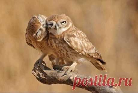 Идеальная ссора: — Пошла ты! — Сам пошел! … — Пошли вместе? — Пошли...)