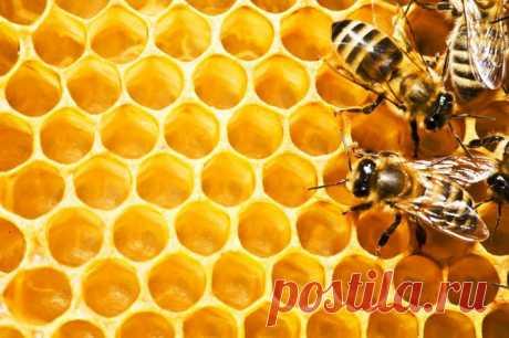 Какой мёд делает нас лучше? | Всегда в форме!