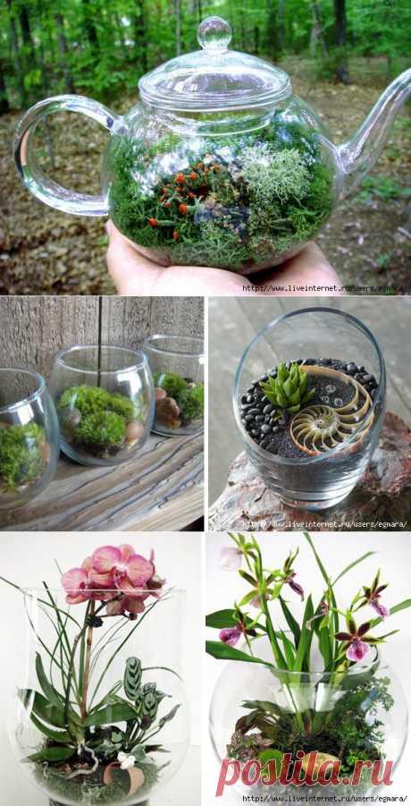 Флорариум. Размещение растений, уход, дизайн.