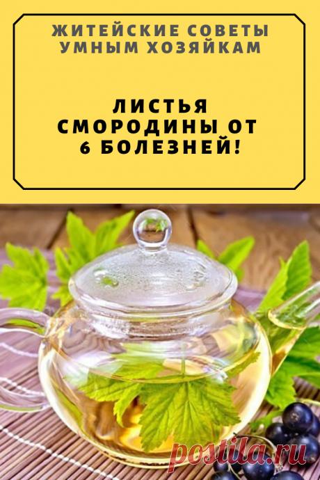 Листья смородины от 6 болезней! | Житейские Советы