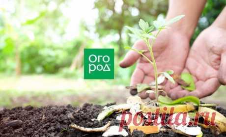 Что положить в лунку при посадке помидоров: 10 рецептов от читателей | На грядке (Огород.ru)