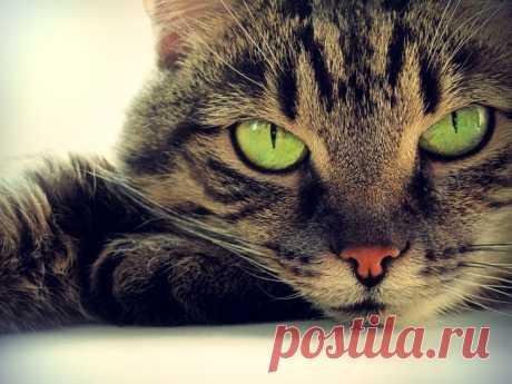Истории про животных. Как кошки захватили мир | Блог Рамзан Саматов | КОНТ