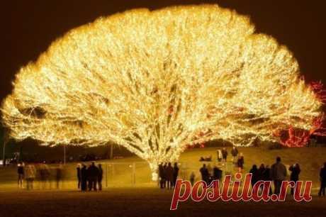Дерево 1000 огней, Дрейпер, штат Юта