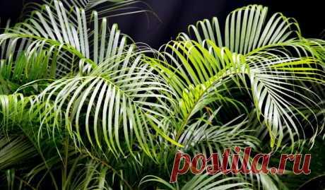 Они даже ночью выделяют кислород… 9 растений, которые хорошо иметь в спальне — Мир интересного