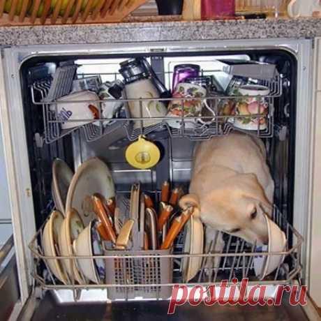 Что можно и нельзя мыть в посудомоечной машине: правила и рекомендации Последствия мытья кухонной утвари из различных материалов в автоматической посудомойке. Что нельзя мыть и почему в посудомоечной машине. Какую посуду класть в ПММ можно. Как различные материалы реагируют на мойку специальными средствами: алюминий, дерево, пластик