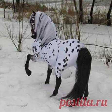Horses– Google+