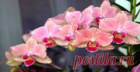 Observando estos 9 reglas y tu orquídea florecerá todo el año