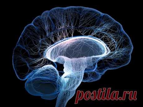Уникальные методики очищения сосудов мозга, о которых умалчивают врачи