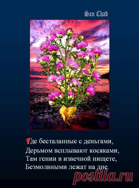 Софиты - от слова София-мудрость * поэтические строки о мудрости.