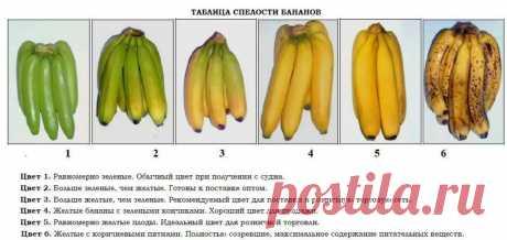 7 полезных свойств бананов и некоторые из них могут вас удивить | Поговорим о женском | Яндекс Дзен